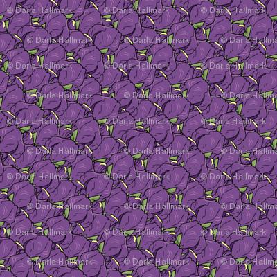 Iris madness