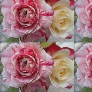 Rosamunda Rose