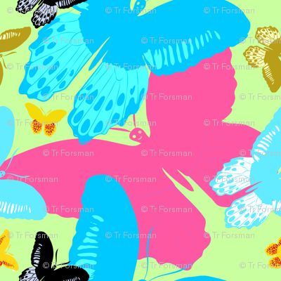 Butterfly Wonderland overlays