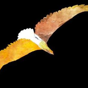 Eagles 5, L