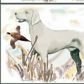Rrweimaraner_and_pheasant2_shop_thumb