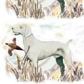 Rrrweimaraner_and_pheasant_shop_thumb