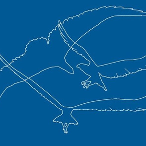 Eagle 16, Blue