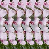 flower fantasia