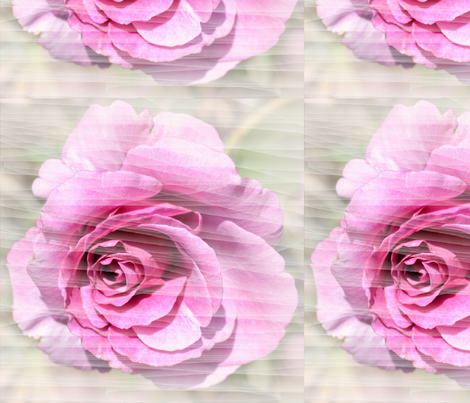 Pink Rose and Lines fabric by peacefuldreams on Spoonflower - custom fabric