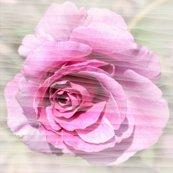 Rrose_pinkth.jpg_shop_thumb