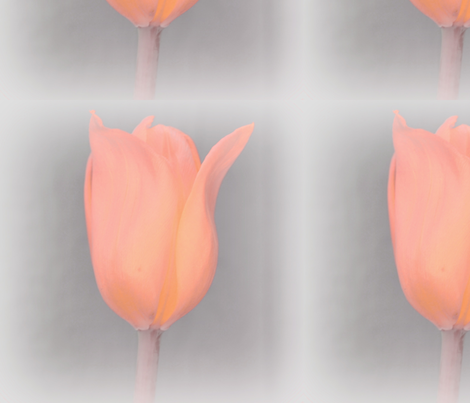 Peach Tulip fabric by peacefuldreams on Spoonflower - custom fabric