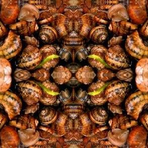 Sicilian Snails