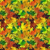 Rrmaple_leaves_on_blue_shop_thumb
