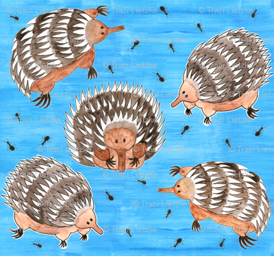 echidnas and ants
