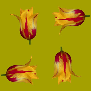 four tulips - bright olive
