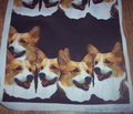 Rr813565_rbetterwelsh_corgi_trial_comment_115623_thumb