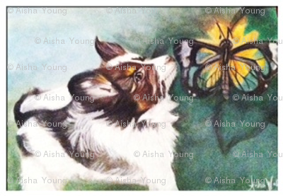 Papillon French word for Butterfly