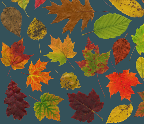 life-sized leaves on slate fabric by weavingmajor on Spoonflower - custom fabric