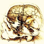 Rranatomy_da_vinci_skull1_shop_thumb