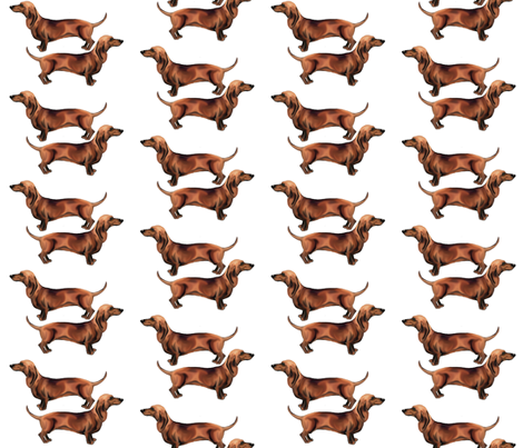 Dachshunds_plain
