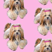 Rrlhasa_apso_shop_thumb