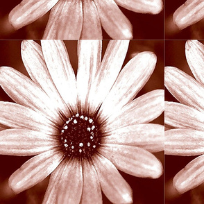 brown_tinted_FLOWER_14