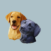 Yellow and black Labrador Retriever heads
