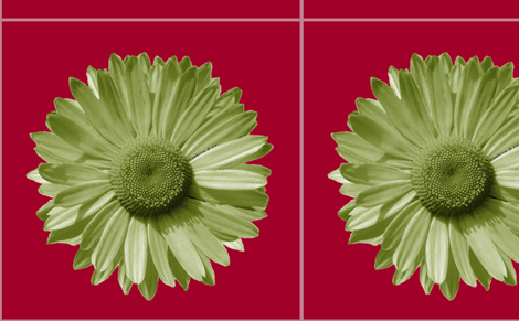 Sofa daisy in red