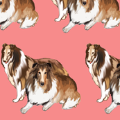 two collies fabric