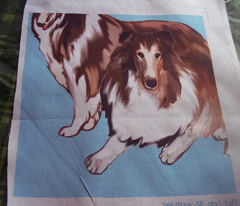 Rrrtwo_collies_blue_background_comment_126311_preview