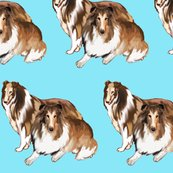 Rrrtwo_collies_blue_background_shop_thumb
