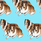two_collies_blue_background