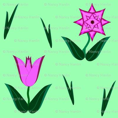 Tulip-Star