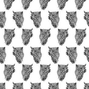 Norwich Terrier head sketch - B/W