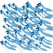 Rrrbluey-blue-jay_shop_thumb