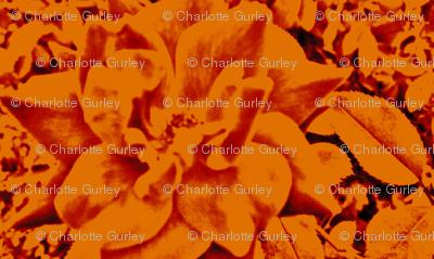 fiery vintage rose