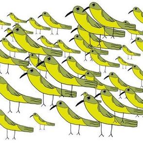 Yellow Warbler Flock