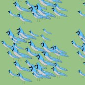 Rblue-jay-flock-larger_shop_thumb