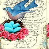 Rrfrench_bluebird_nest_shop_thumb