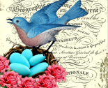 Rrfrench_bluebird_nest_thumb