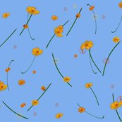 Rrdaisies_on_blue_large_shop_thumb