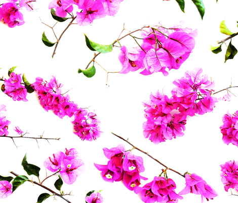 Bougainvillea - 1  fabric by heytangerine on Spoonflower - custom fabric