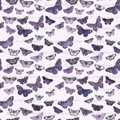 Flutter, Butterflies Purple