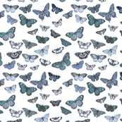 Flutter, Butterflies in Blue