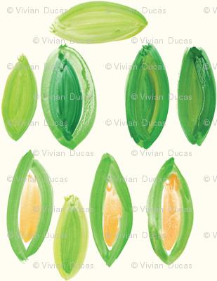 cestlaviv_corn