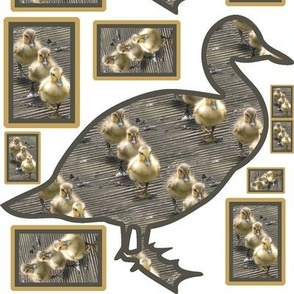 3 Little Duck Patch selection