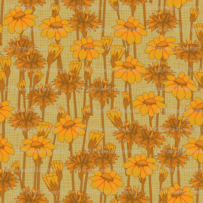 bachelor_buttons_and_daisies_goldenglow
