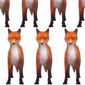 Rrr027-red_fox_stare__l_shop_thumb