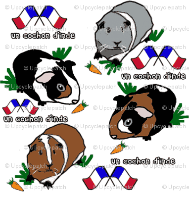 Guinea Pig French