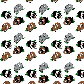 4 in 1 Guinea Pigs