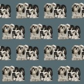 Rrrtibetan_terriers_shop_thumb
