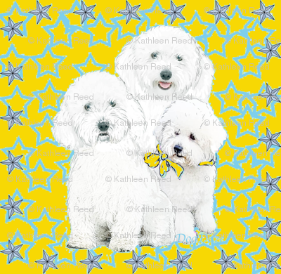 BICHONS WITH BLUE STARS