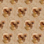 Rrrpomeranians2__shop_thumb