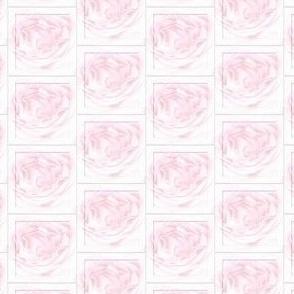 Soft pastel pink rose squares